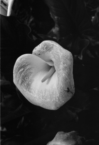 Lily2001_1