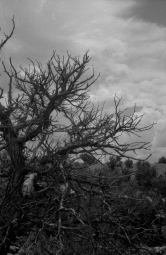 branches_1