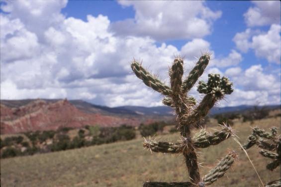 cactus_vista_3