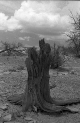 stump_1