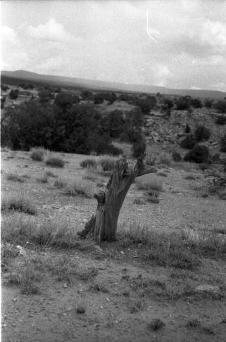 stump_vista_1