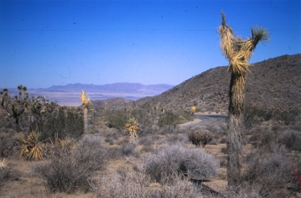 joshuatree_vista_1